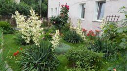 letnie ogrody